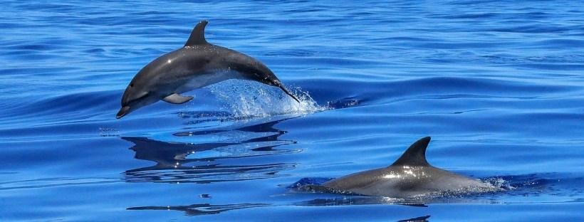 Pływanie z delfinami na Mauritiusie jest źródłem intratnego businessu, nie daj się w to wciągnąć!