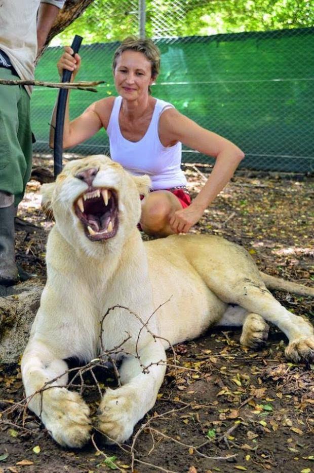lwy-w-parku-casela-na-mauritiusie