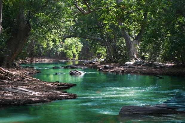 black-river-gorges-mauritius