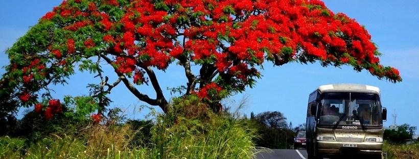 mauritius poradził sobie z wirusem, śluby i wycieczki znów czekają na turystów